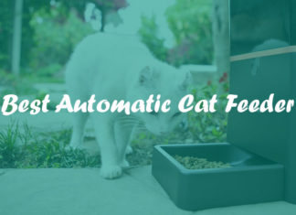 Best Automatic Cat Feeder Reviews