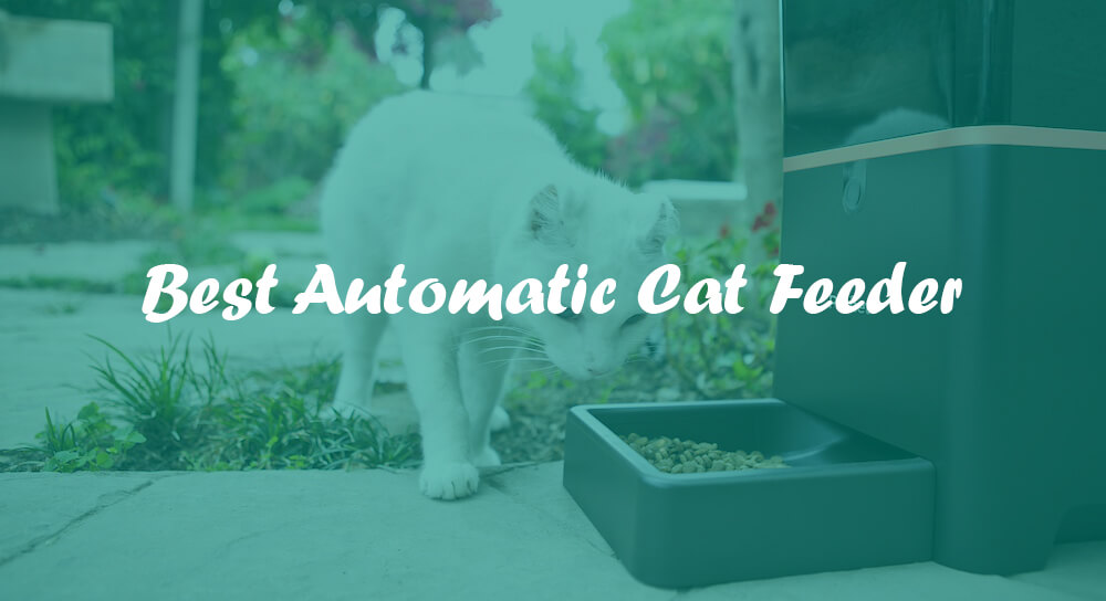 available feeder finding smart best com cat automatic the feedthemiaw